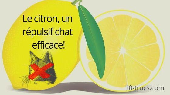 Répulsif chat avec un citron