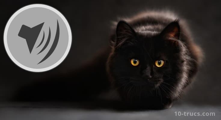 Répulsif chat pour vite éloigner tous les chats
