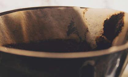 répulsif naturel limace, marc de café