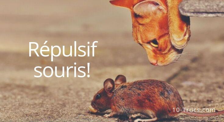 Répulsif pour faire fuir les souris