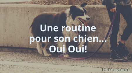 une routine pour calmer son chien