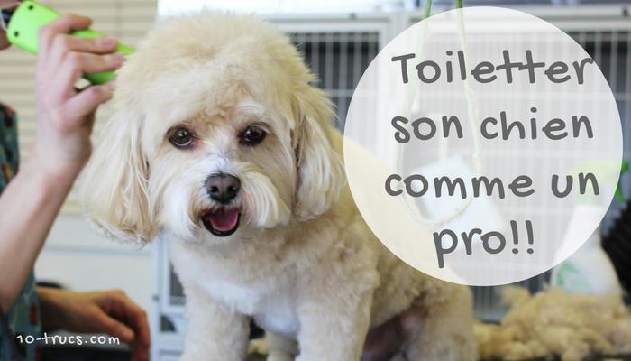 comment toiletter son chien