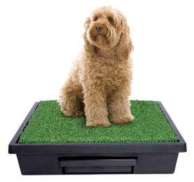 toilettes portable pour chien