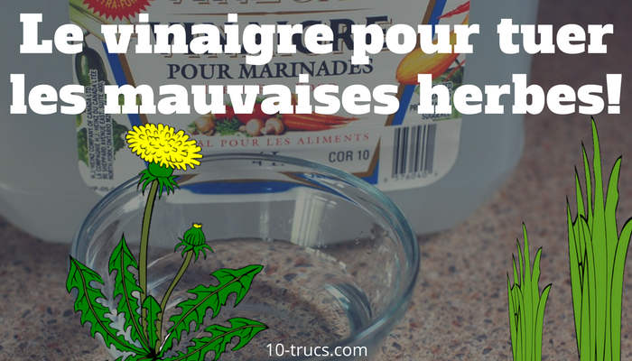 tuer les mauvaises herbes avec du vinaigre