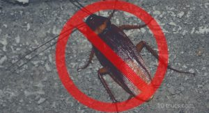 anti cafard efficace pour tuer les cafards