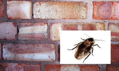Anti cafard, attention à l'humidité et aux fissures dans la fondation