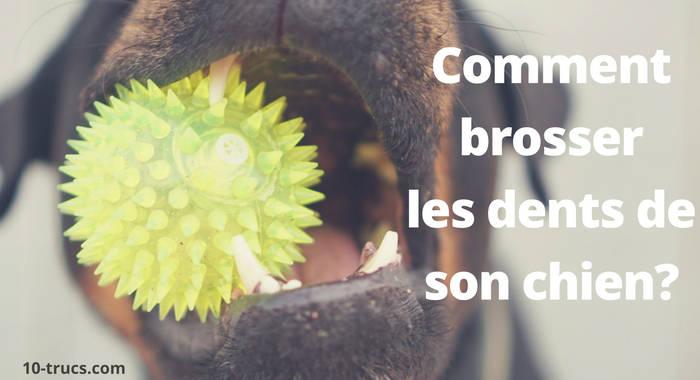 comment brosser les dents de son chien
