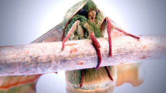 Anti papillon et anti mites