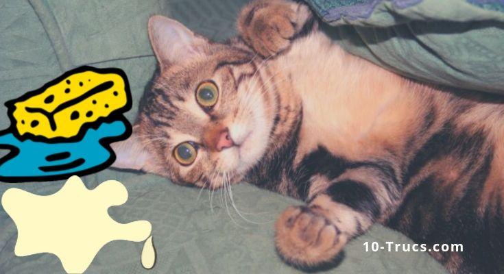 Enlever une tache d'urine de chat
