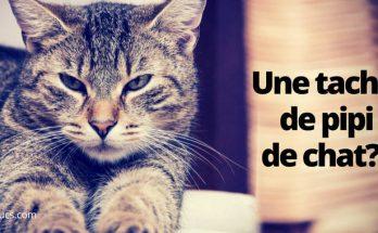 nettoyer l'urine de chat