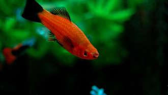 acheter un aquarium, prix aquarium,