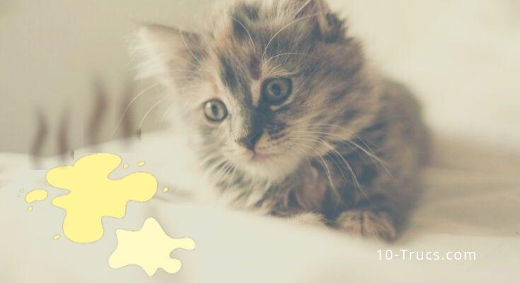 comment enlever l'odeur d'urine de chat