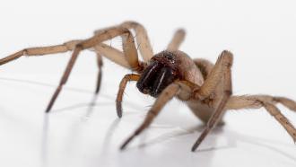 araignée maison, astuce anti araignée,