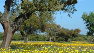 allergie pollen, pollen arbre, pollen été,
