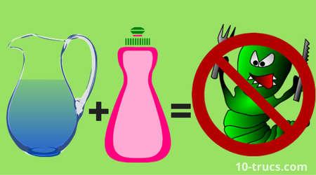 anti chenille efficace avec de l'eau savonneuse