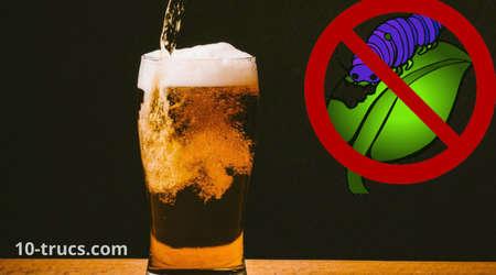 répulsif à chenille avec la bière