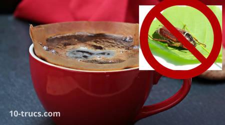 marc de café contre les hannetons et les larves