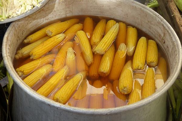 bouillir blé d'inde, bouillir du maïs,