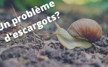 lutter contre les escargots pour les faire fuire