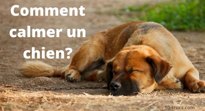 comment calmer un chien