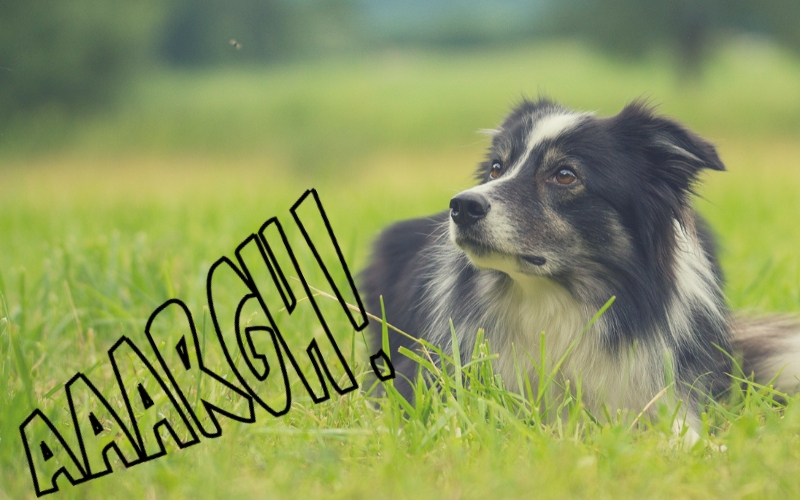 Répulsif naturel et truc anti chien efficace