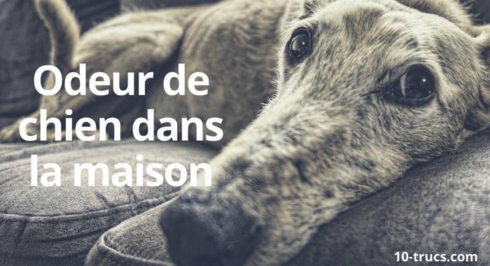 odeur de chien dans la maison