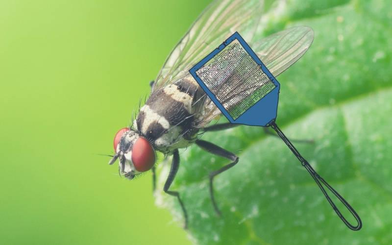 anti mouche efficace et naturel