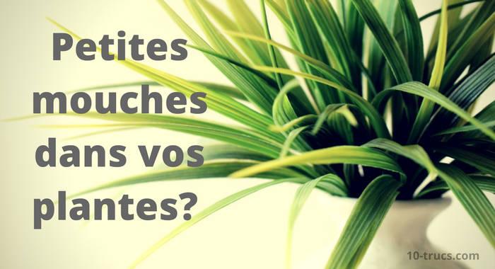 anti mouchettes dans les plantes