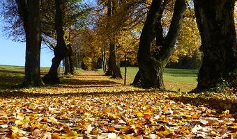 a faire a l'automne, activité automne,