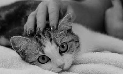 un chat stressé fait pipi partout