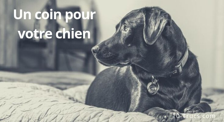 Un coin et une chambre pour chien