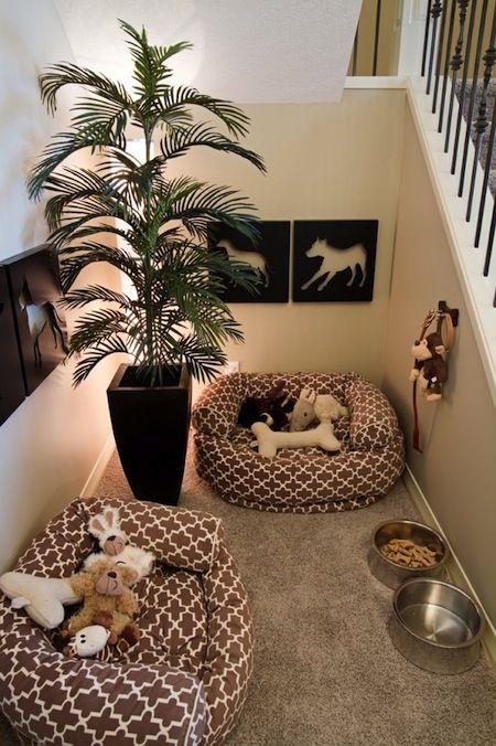 espace chien escalier, coin pour les chien escalier,