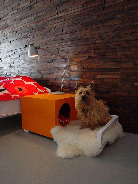 coin chien chambre a coucher, espace chien chambre à coucher,