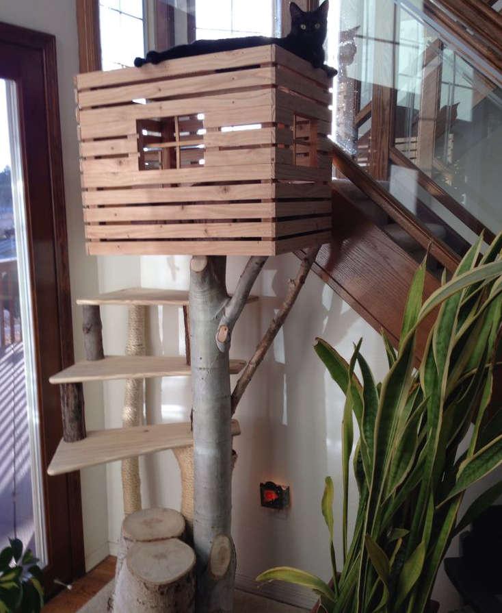 arbres chat 10 id es et photos trucs et astuces. Black Bedroom Furniture Sets. Home Design Ideas