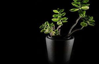 faire pousser une plante, planter une plante,