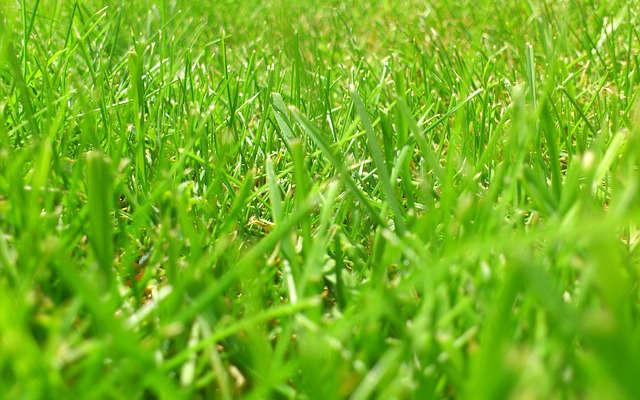 avoir un beau gazon vert