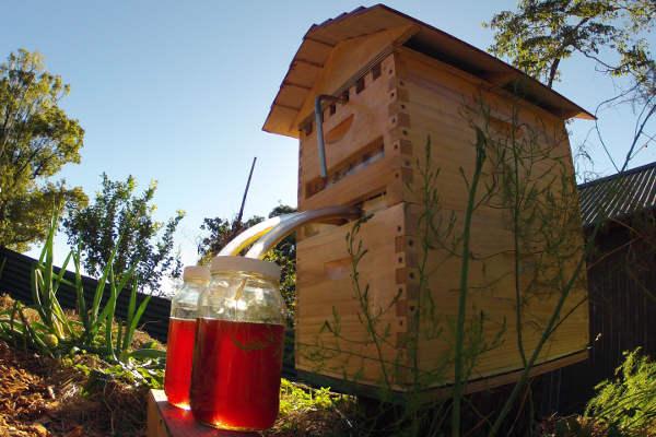 ruche miel automatique, flow hive honey,