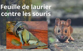 Feuille de laurier contre les souris