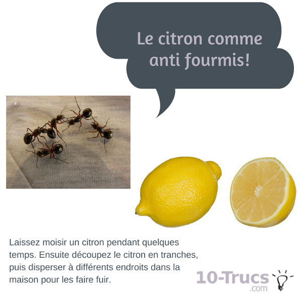 citron anti fourmis, citron contre les fourmis,