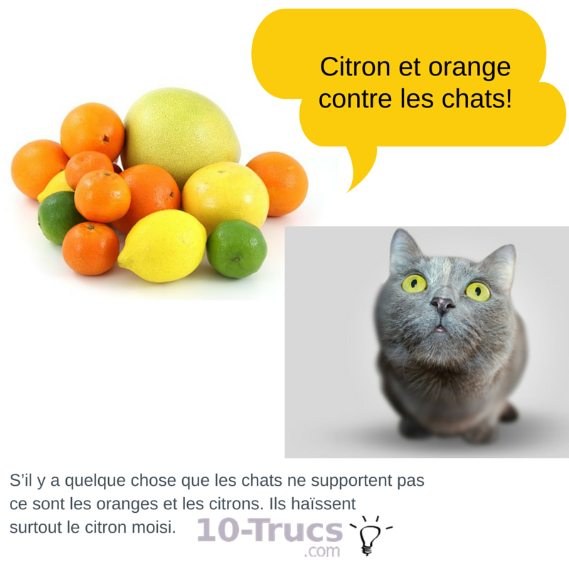 citron et orange contre les chats
