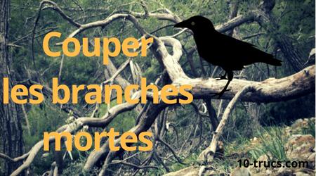 couper les branches mortes contre les corbeaux