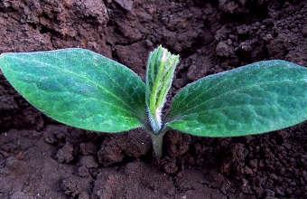 faire partir des semis, faire partir des semences,