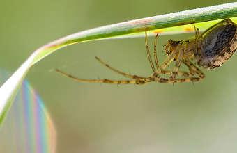 piqûres d'araignées, soulager piqûre araignée,