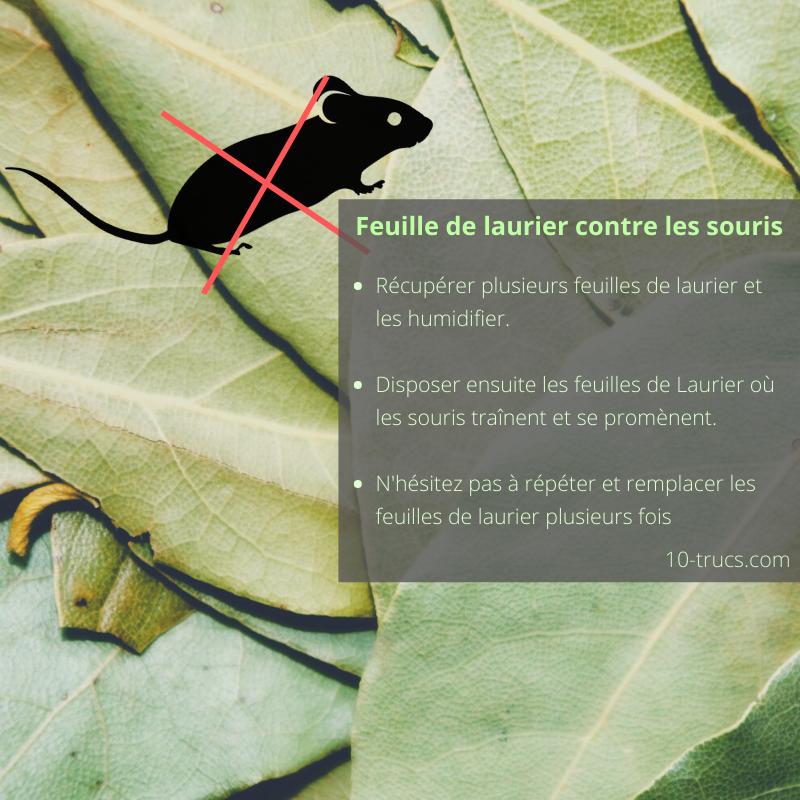 Répulsif souris avec des feuilles de laurier