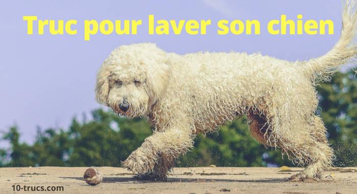 comment laver un chien