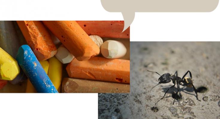 craie contre les fourmis, craie anti fourmis,