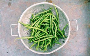 cultiver des fèves, faire pousser des fèves,