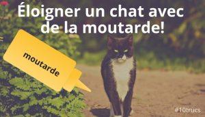 éloigner les chats avec de la moutarde