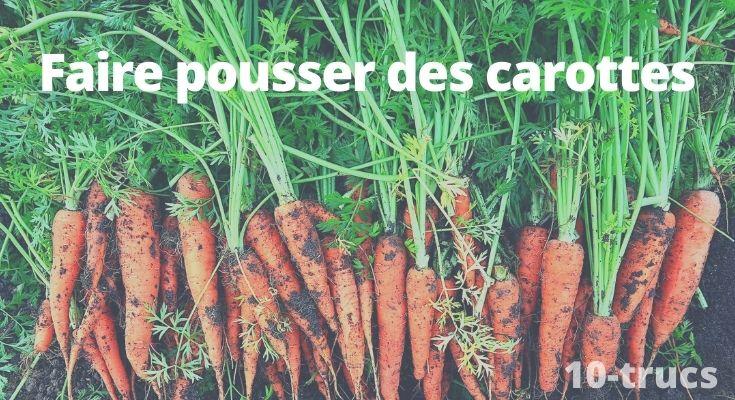 Faire pousser des carottes et bien les cultiver dans le potager