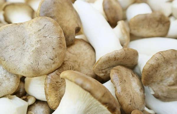 faire pousser des champignons, cultiver des champignons,